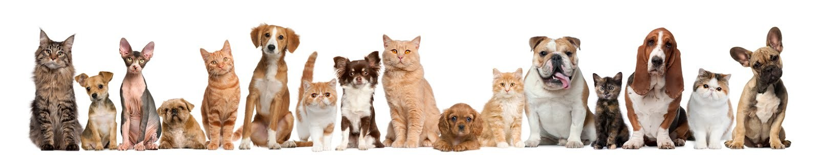 cropped-lots-of-cats-and-dogs.jpg